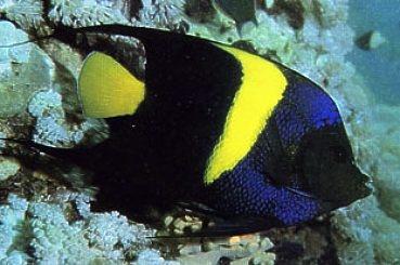 Aquascaping lab inserimento nuovi pesci in acquario o for Pesci per acquario piccolo